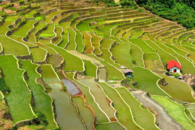 Fabulous Green Scenery in Banaue