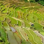Fabulous Green Scenery in Banaue