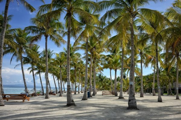 Coconut Palm Trees on a tranquil beach in Bohol