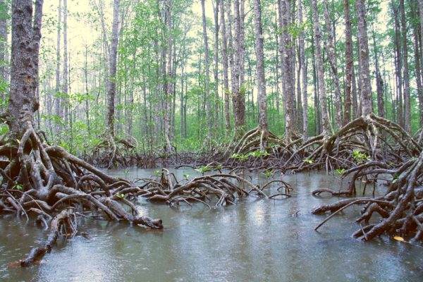 A rainy day in the Mangrove forest near the Underground Rive
