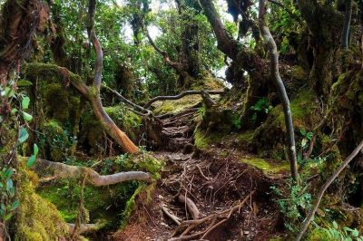Exploring Cameron Highlands' mossy forest
