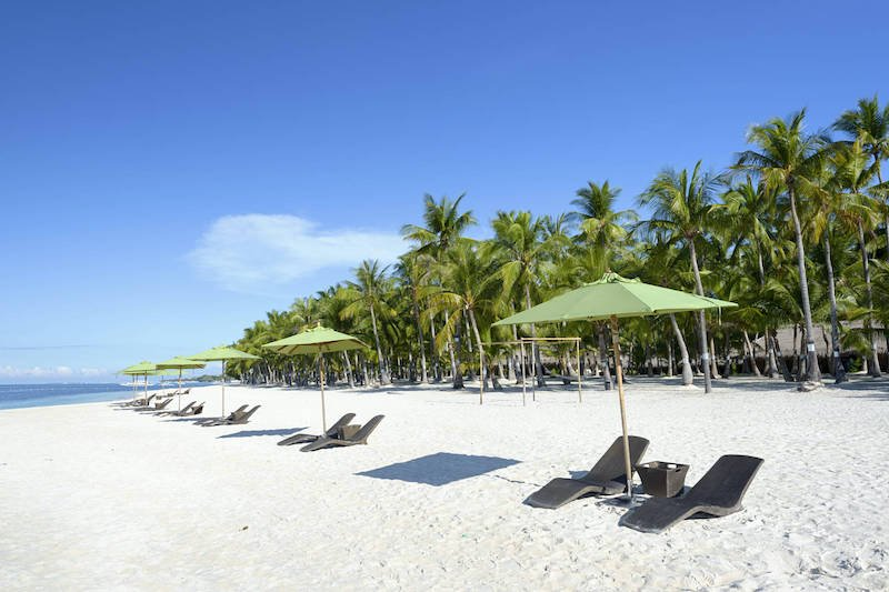 White beach lined with coconut trees in Panglao Island