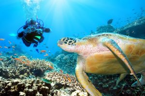 Scuba divers in Sipadan Island