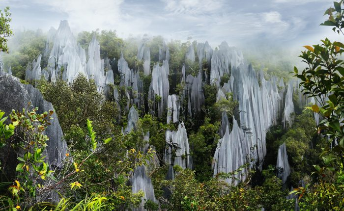 Panoramic view of the Mulu's limestone Pinnacles from the view point