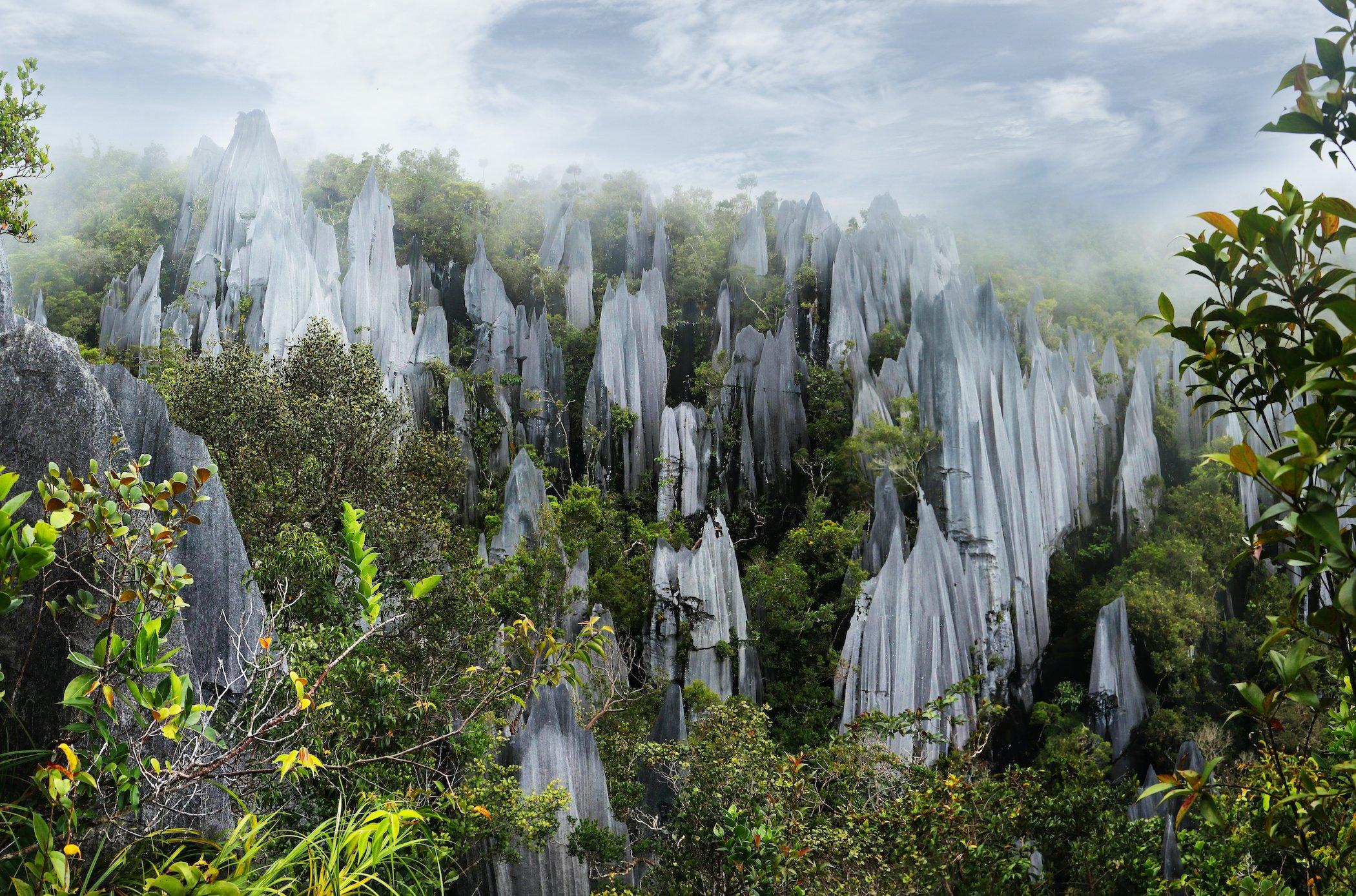 Pinnacles in Mulu National Park Malaysia