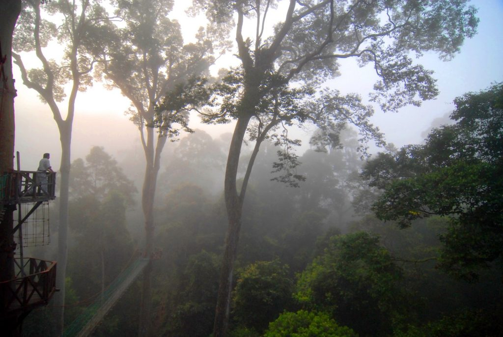Rainforest mist Danum Valley