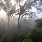Misty rain forest view from Danum Valley's Canopy Walkway
