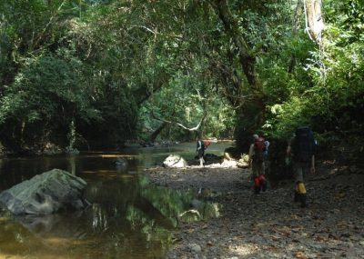 Tourists trekking in Borneo's rainforest