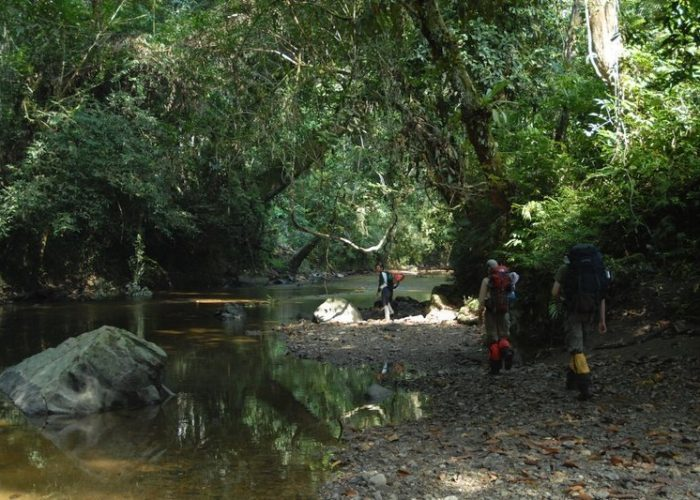 Tourists trekking in Borneo's rainforest