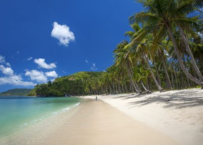 Pristine beach lined with coconut trees in El Nido, Nacpan Beach