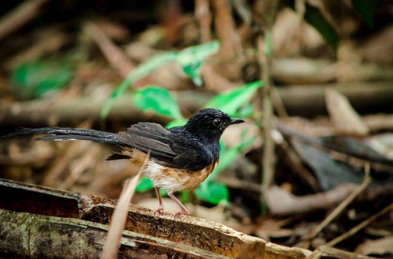 A bird in Taman Negara National Park