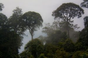 Morning misty rainforest in Borneo