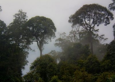 Morning misty rainforest in Borneo