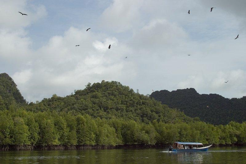 Eagle Feeding cruise in Langkawi's Kilim Geoforest Park