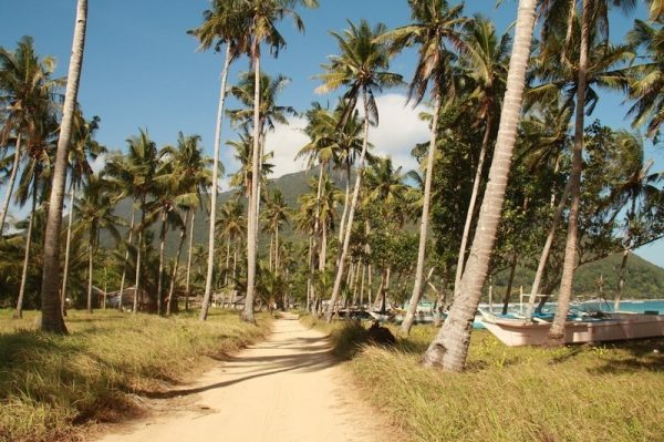 A trail with coconut palms along the beach in Sabang near the Underground River