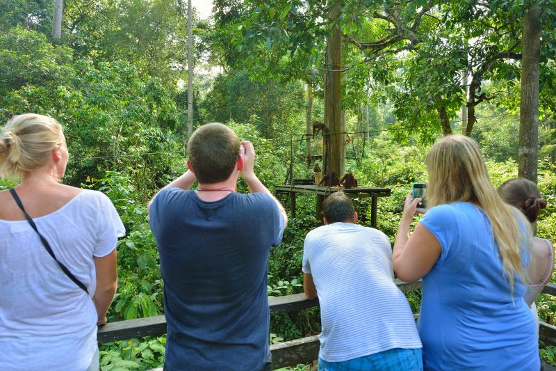 Tourists taking photos of the orangutans during the feeding time