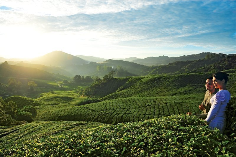 A couple of tourists exploring Cameron Highlands' Tea Plantation