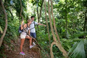 Tourists hiking Sabah's Lowland Rainforest