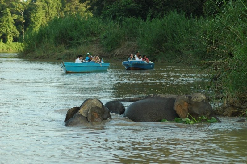 Tourists on a wildlife safari by boat on the Kinabatangan River