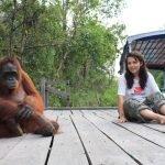 Tourist with orangutan at Camp Leakey Kalimantan