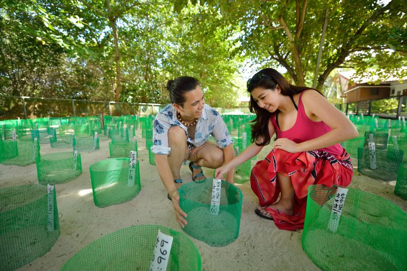 Tourists visiting the hatchery in Selingan Turtle Island