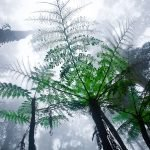 Giant ferns in the misty rainforest in Sabah, Borneo