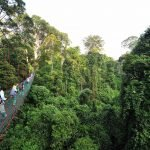Tourists walking on Danum Valley's Canopy Walkway