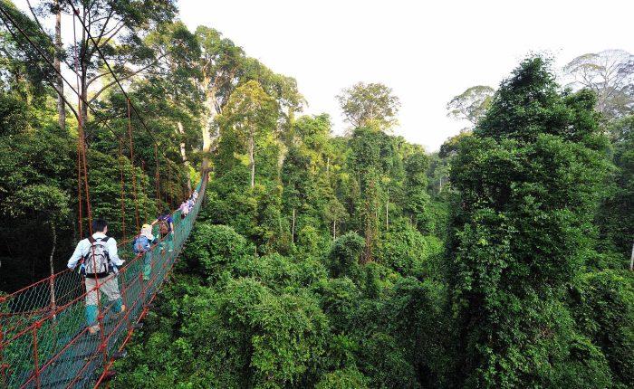 Tourists walking on Danum Valley's Canopy Walkway