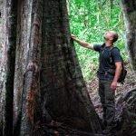 Tourist hiking in Borneo's lowland rainforest