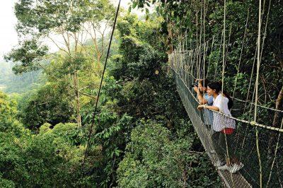 A group of tourist enjoying the bird view from the Canopy Walk in Taman Negara