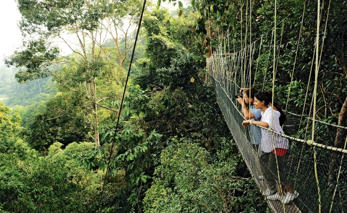 A group of tourist enjoying the bird view from the Canopy Walk in Taman Negara