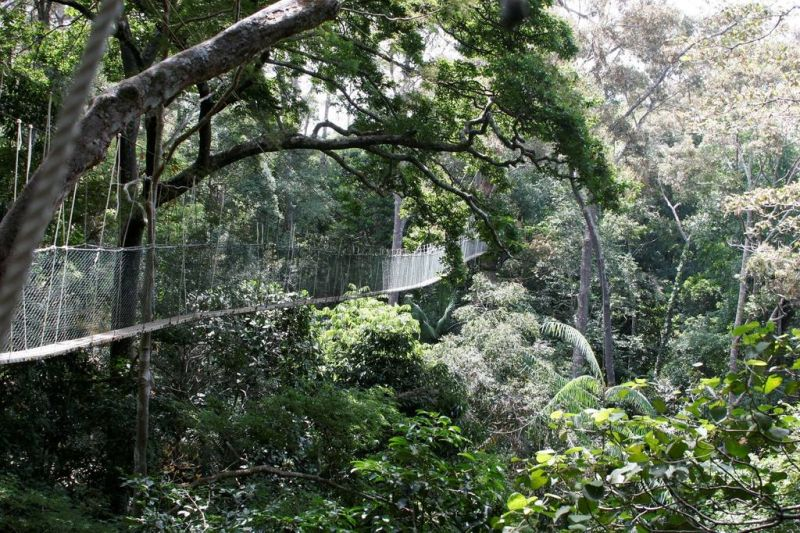 The canopy walk is one of the highlights of Malaysia's Taman Negara