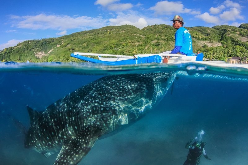 Tourist boat in Olsob taking tourists to swim with whale sharks